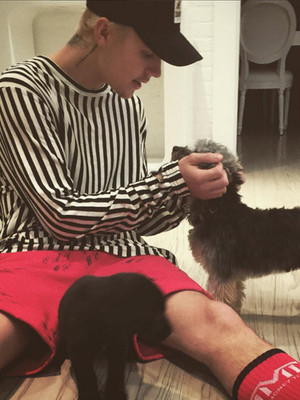 Awww! You Gotta See Justin Bieber's Precious New Puppy Phil!